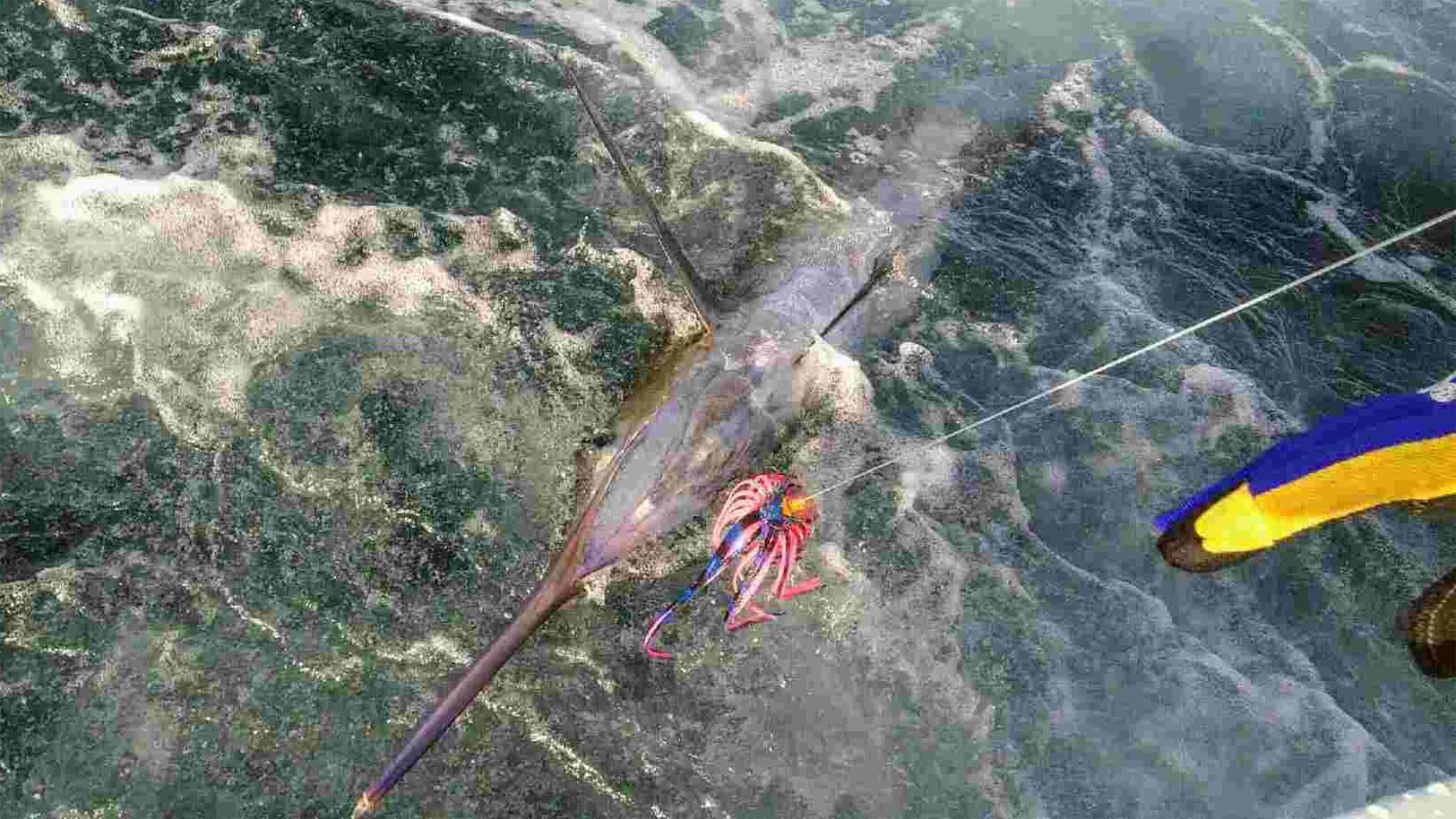 Fishing Charter: Landing a Sailfish